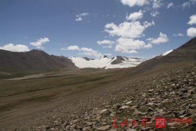 藏北羌塘高原冰缘带植物调查