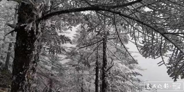 轿子雪山下雪啦!冰瀑、雾凇宛如仙境6.jpg