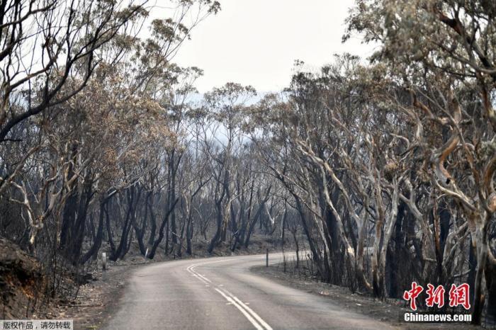 澳洲山火2.jpg