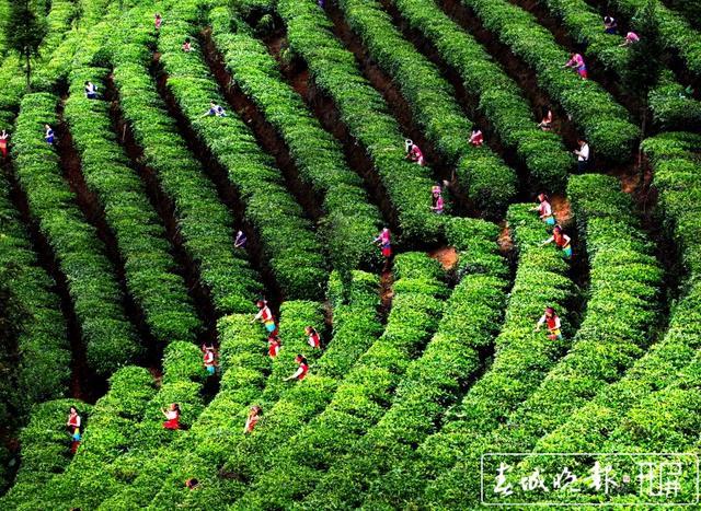 普洱茶十项标准