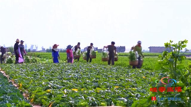 通海加大蔬菜进京,助力北京抗疫