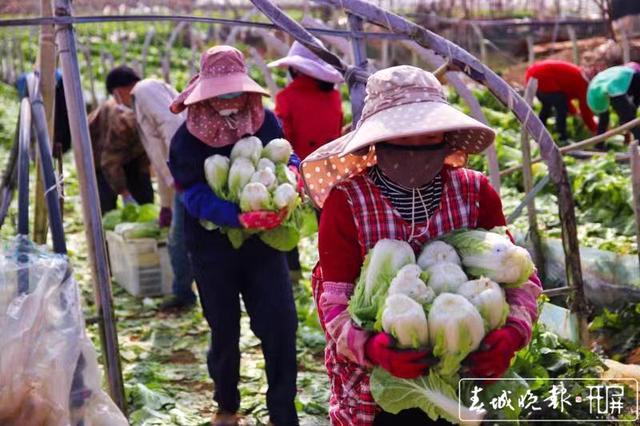 一日三千里!云南百吨蔬菜直达武汉医院食堂 (1).jpg