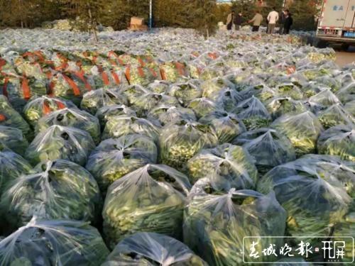 晋宁村民自发捐赠160吨蔬菜2.jpg