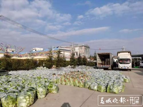 晋宁村民自发捐赠160吨蔬菜3.jpg