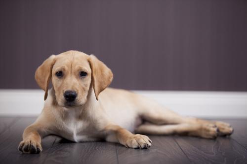 香港渔护署检测发现狗对新冠肺炎测试呈弱阳性反应.jpg