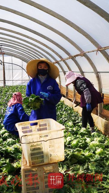 赞!云南24岁大学生组织捐赠了170吨蔬菜