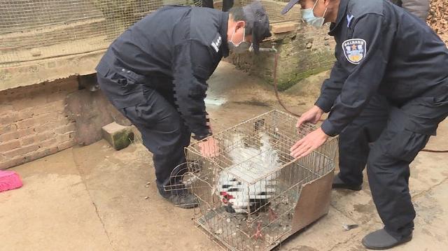云南普洱警方接连查处5起无证驯养猕猴案件2.jpg