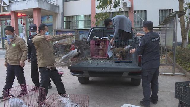 云南普洱警方接连查处5起无证驯养猕猴案件1.jpg