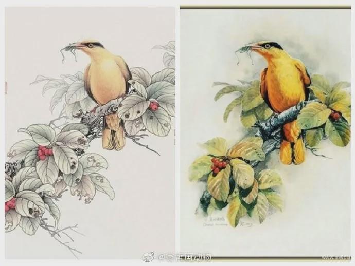 抄袭云南知名植物科学画家曾孝濂6.jpg
