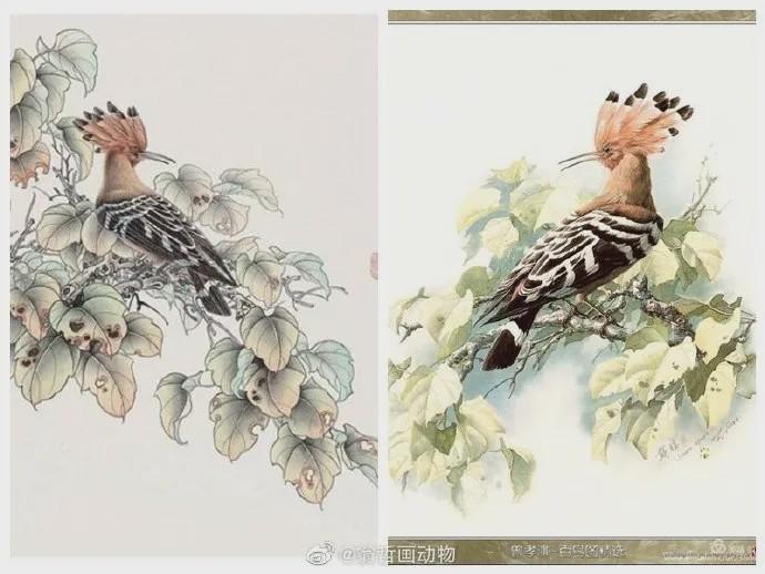 抄袭云南知名植物科学画家曾孝濂4.jpg