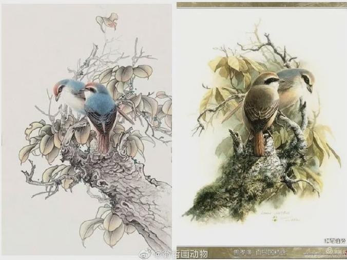 抄袭云南知名植物科学画家曾孝濂5.jpg