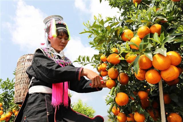 云南又有31个贫困县(市、区)拟退出贫困县序列21.jpg