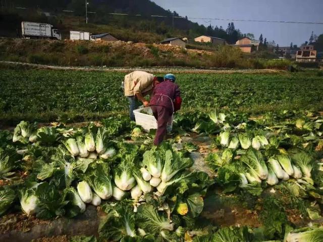 云南又有31个贫困县(市、区)拟退出贫困县序列19.jpg