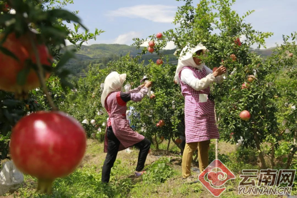 云南又有31个贫困县(市、区)拟退出贫困县序列28.png