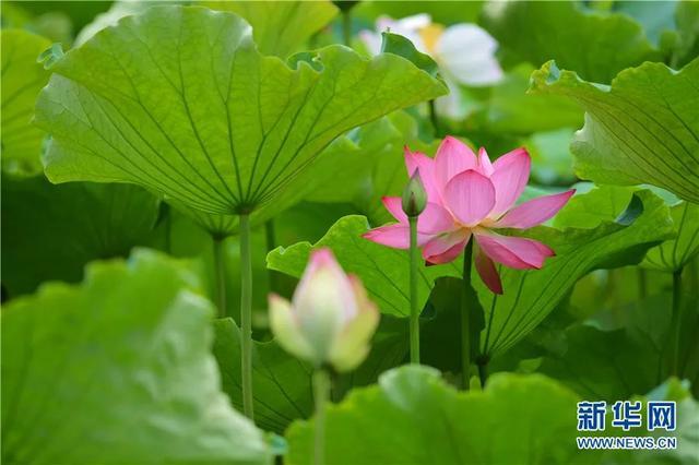 昆明丽江临沧上榜全球避暑名城3.jpg