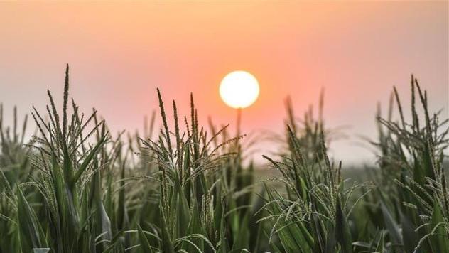 云南省多措并举确保粮食质量安全