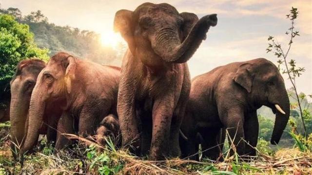 保护珍稀濒危野生动植物,云南获3080万中央资金支持!