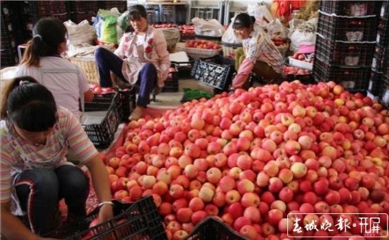 """乌蒙山苹果变身""""金果果"""" """"插翅""""出山向更大市场 (1).jpg"""