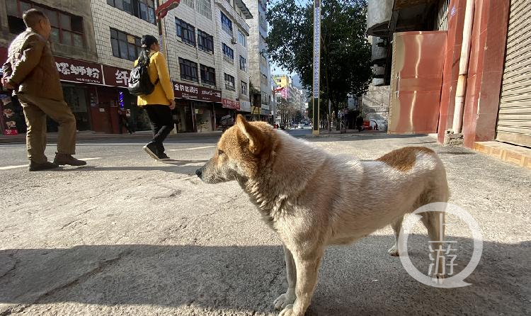 威信县文明养犬