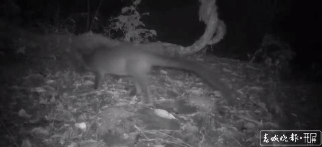喜!保山昌宁—红外相机拍到多种珍稀野生动物