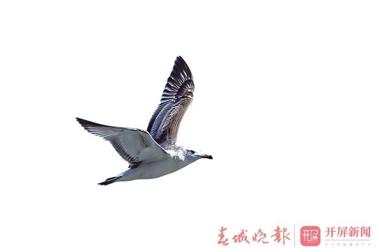 渔鸥.jpg