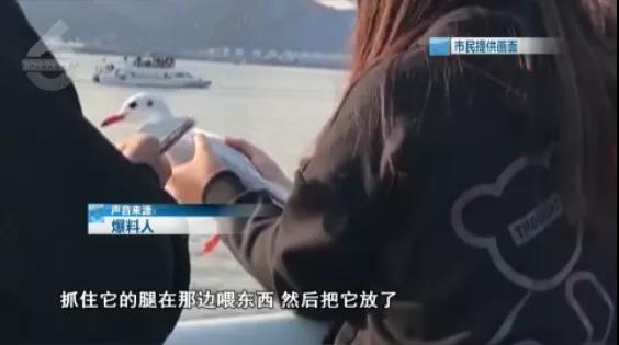 海埂大坝一女子抓红嘴鸥拍照、喂食4.jpg