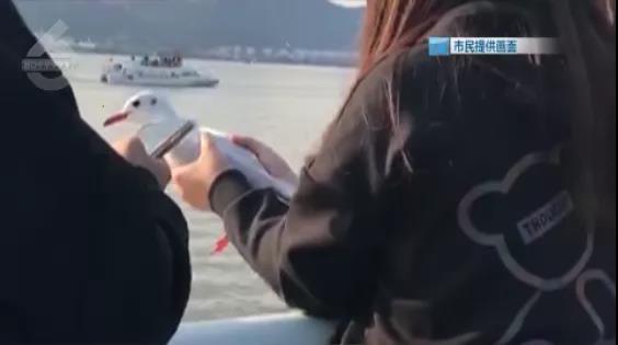 海埂大坝一女子抓红嘴鸥拍照、喂食5.jpg