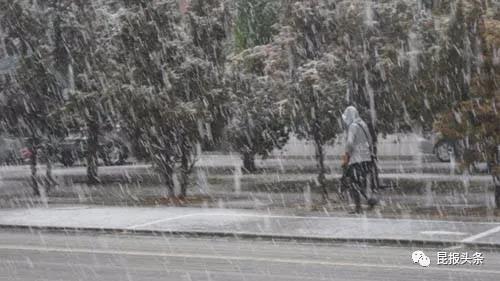 昆明今冬可能下雪!或比冻死行道树那年还冷!1.jpg