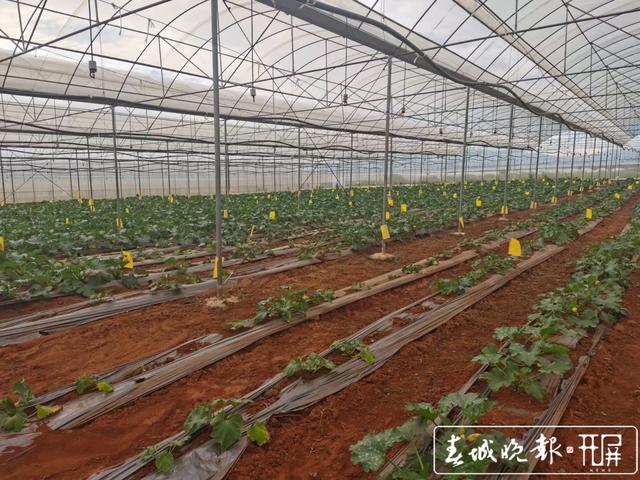 总投资约5亿元 云南省最大有机农业产业园项目落户保山市隆阳区