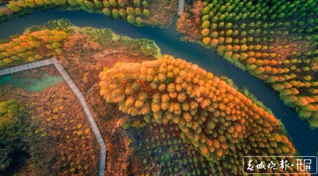 山川秀美、水天一色!晋宁滇池湿地迎来最佳观赏期,太美! 杨hi质高 摄