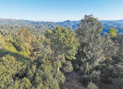 西双版纳有村民为提高茶叶产量毁林,云南开展专项整治1.jpg