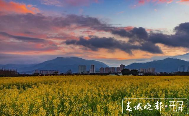 富民——油菜花开 快来打卡 (1).jpg