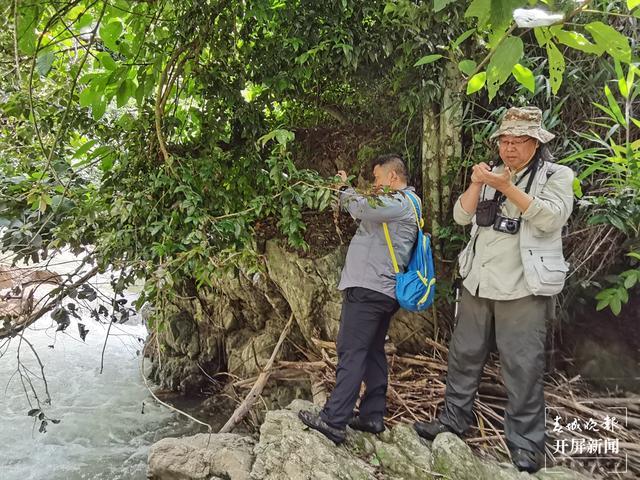云南文山发现植物新种云南管蕊茶