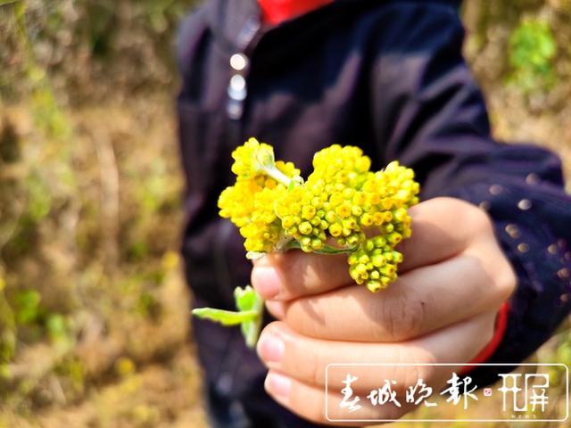 云吧 送你一朵小黄花,再送你一个龙陵黄花粑粑