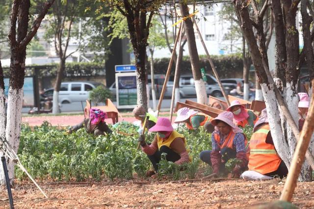 工人们正在完善绿化。.jpg