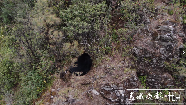 保山昌宁:天堂山林区拍到国家二级保护动物黑熊静卧珍贵视频