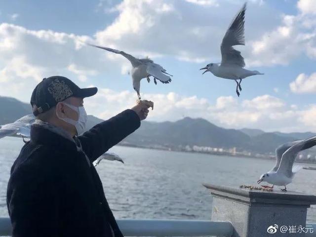 崔永元喂海鸥(图据微博)