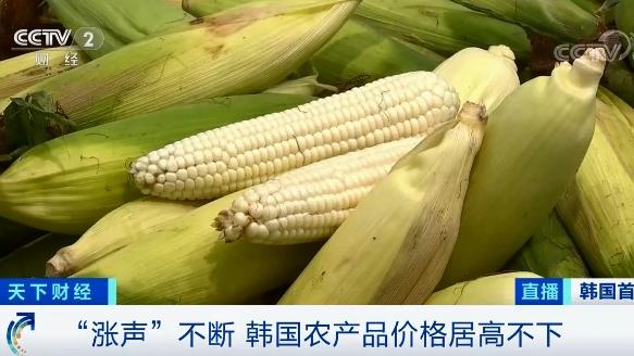 """农产品价格涨涨涨!今起,这个国家进口玉米""""零关税""""!"""