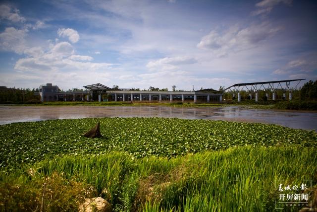 发布会 _ 17.6公里湖滨生态廊道将于6月底建设完成 (1).JPG