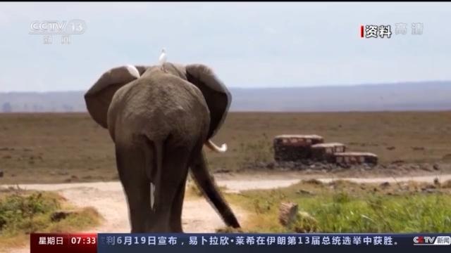 云南野象北上正常吗?野生象是迁徙物种吗?一文科普→