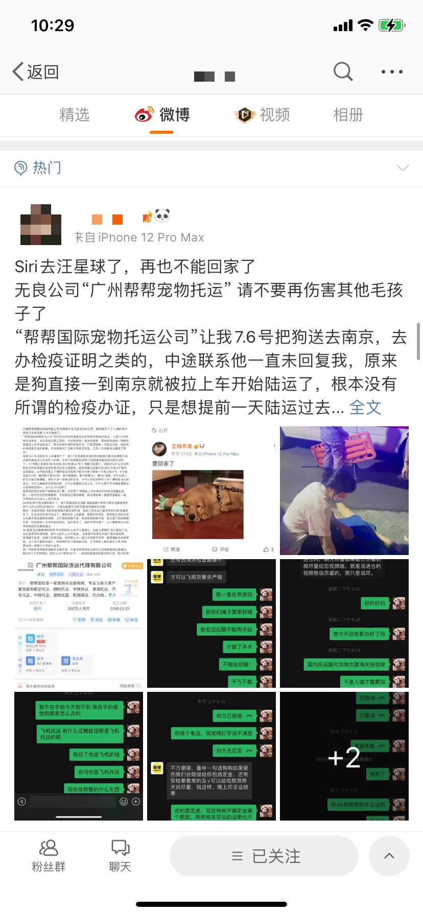 宠物托运中暑致死,数万网友为金毛Siri应援发声!广州市监部门介入 视频截图