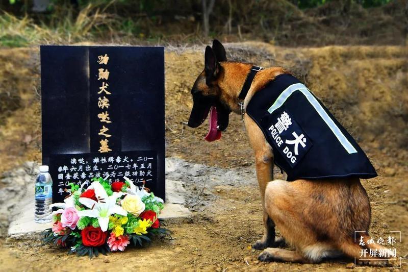 """犬亦有情,""""鹰""""击长""""空""""!芒颜边境检查站一条警犬的故事.jpg"""