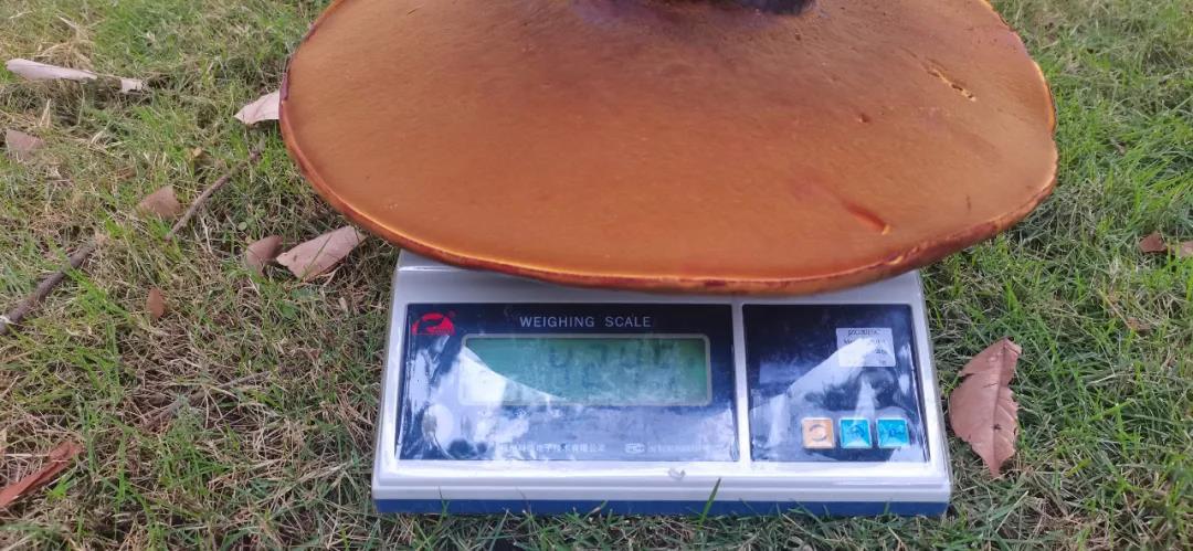 8.4斤野生菌.jpg