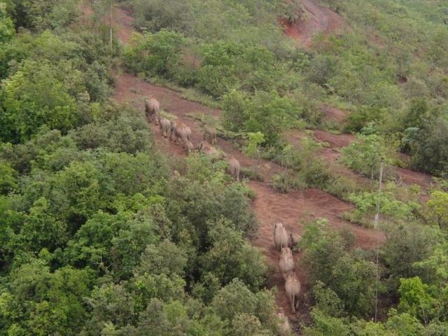 北移亚洲象群从红河州石屏县迁移至玉溪市元江县(云南省森林消防总队供图)