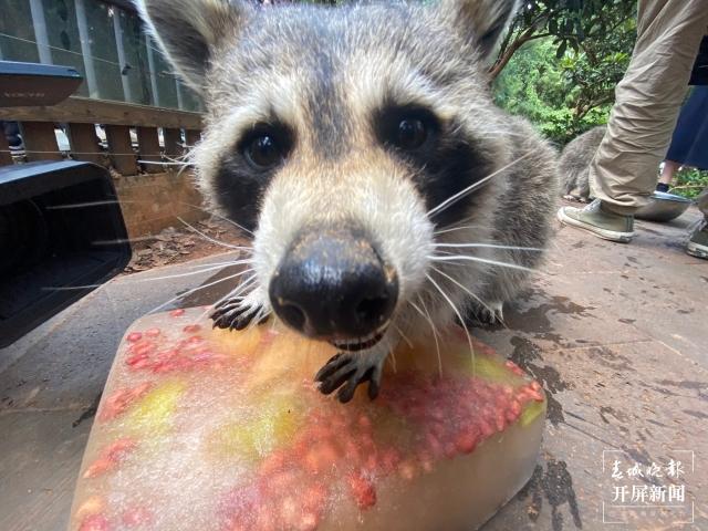 夏日动物吃冰季,好玩又有趣 (5).jpg
