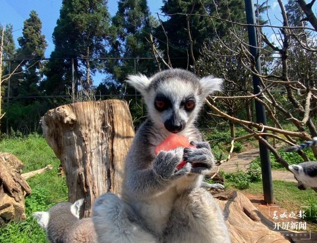 夏日动物吃冰季,好玩又有趣 (2).jpg