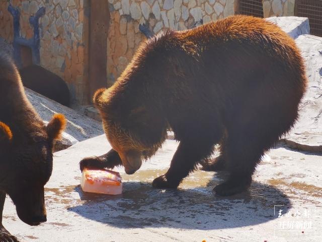 夏日动物吃冰季,好玩又有趣 (9).jpg