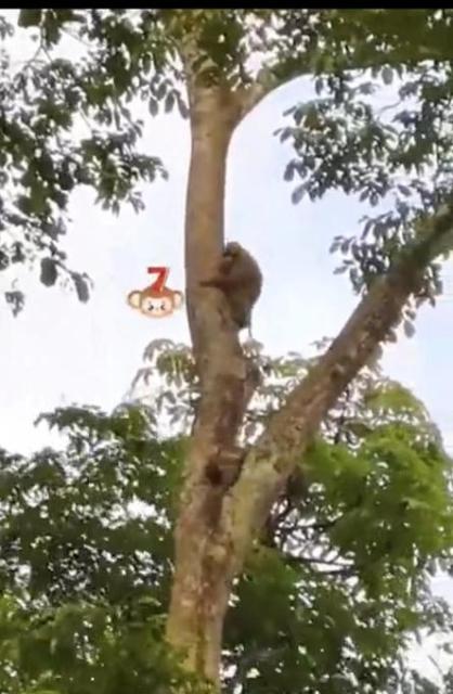"""""""排排站,滑滑梯!""""注意安全讲秩序,保山龙陵这群小猴子萌哒哒(视频截图).jpg"""