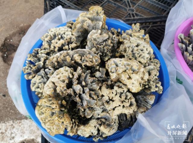 又是一年吃菌季!昆明周边买菌、吃菌指南请查收7.png
