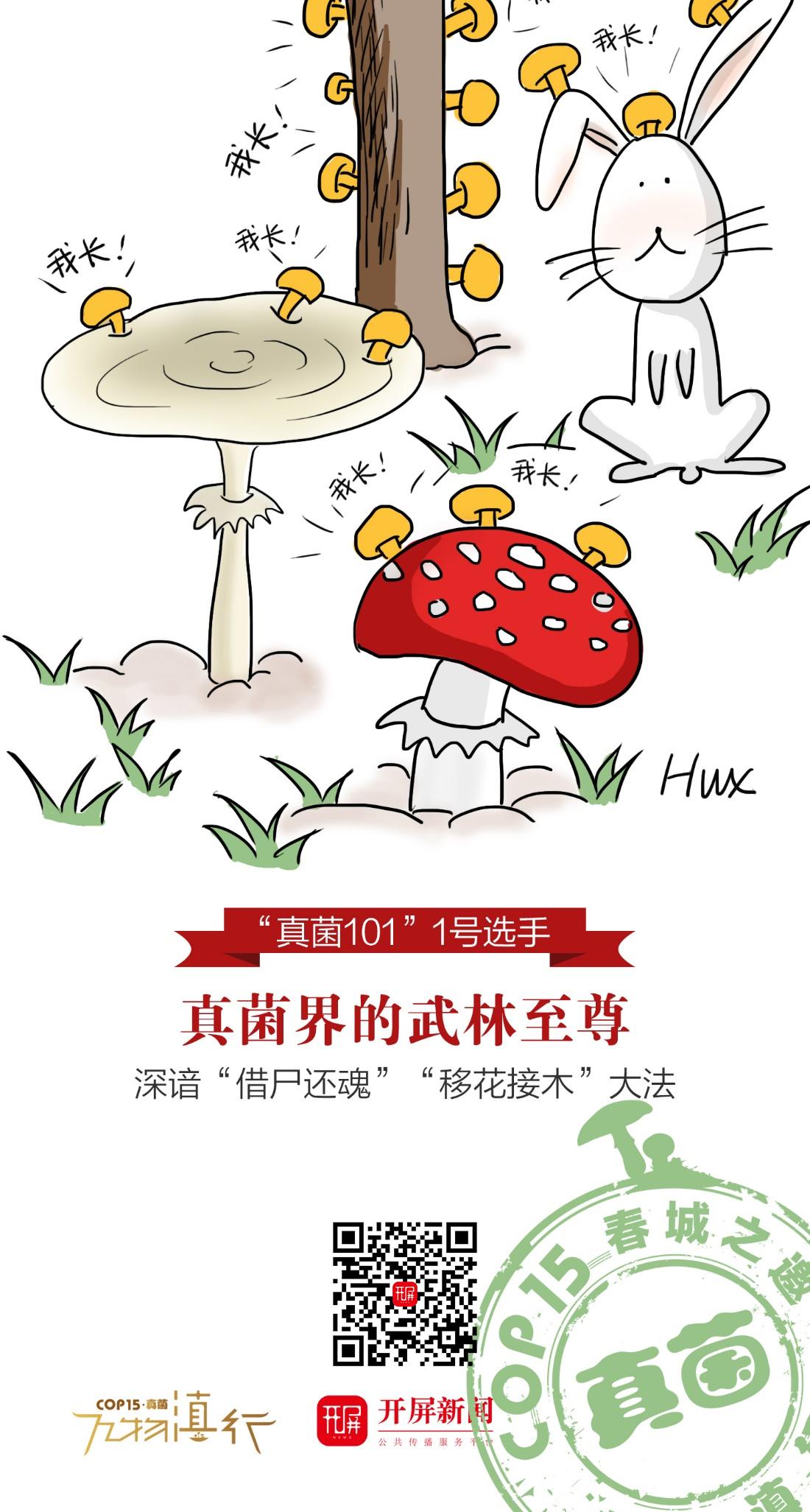 【万物滇行】菌瘿伞海报